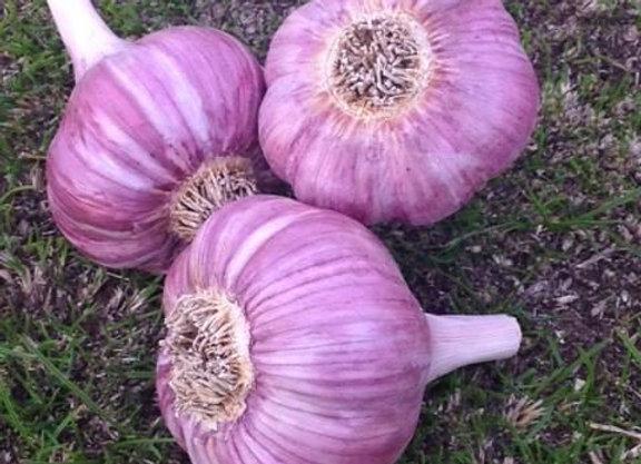 Persian Star  Garlic