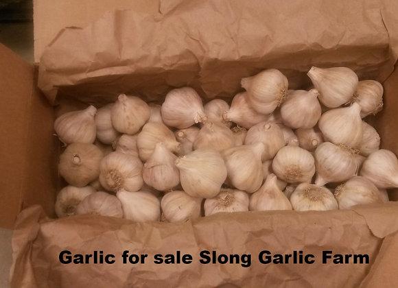 German White Garlic
