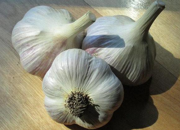 Bogatyr Garlic