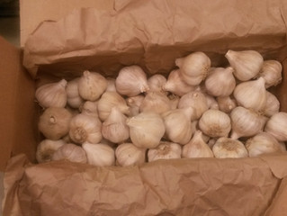 GARLIC FOR SALE
