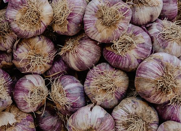 Spanish Roja  Garlic