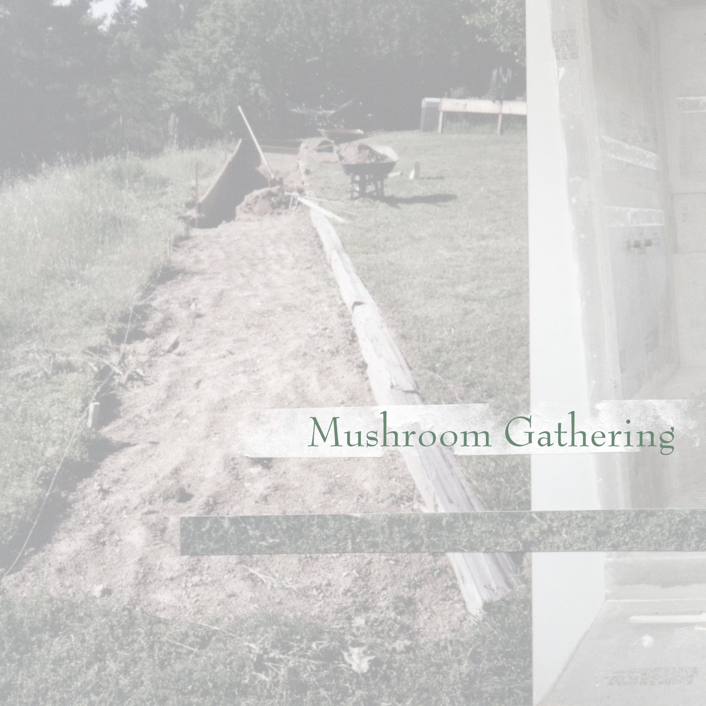 Mushroom Gathering Website Tile.jpg