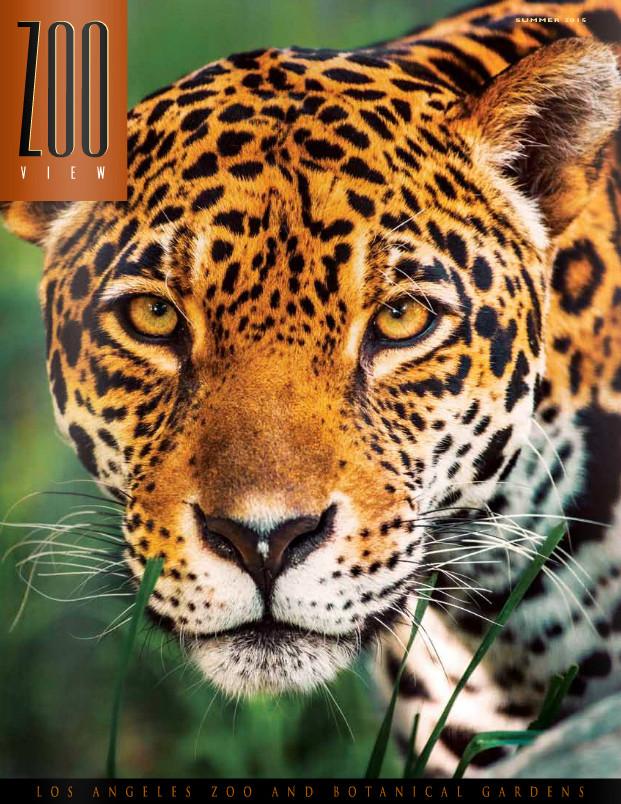L.A. Zoo Magazine