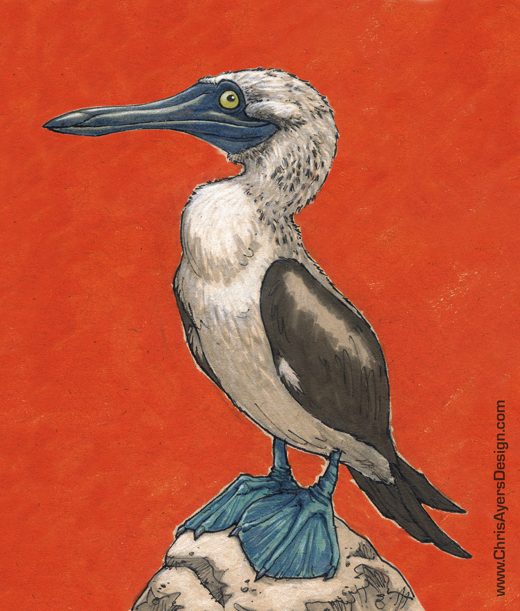 Day 001 - Blue-Footed Booby