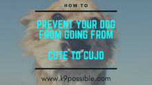 How To Prevent Your Happy Go Lucky Puppy From Becoming Reactive At the Age Of Maturity