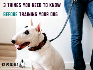 3 Things You Need To Know Before Training Your Dog