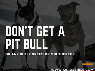 Don't Get A Pit Bull
