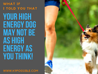 Is Your Dog Really As High Energy As You Think They Are?