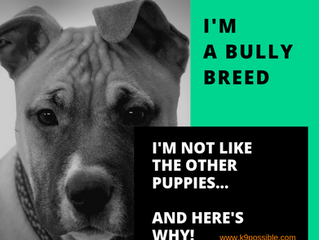 What You Need To Know About A Bully Breed Puppy