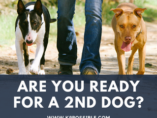 Are You Ready For A 2nd Dog?