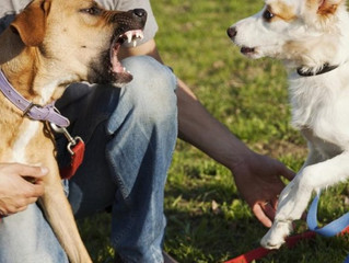 How To Help Your Dog To Be Less Reactive