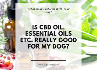 Should I Give My Dog CBD Oil