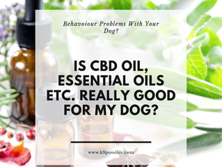 Should I Give My Dog CBD Oil