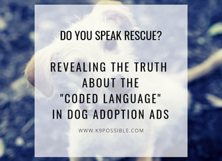Do You Speak Rescue? Revealing The Truth About Coded Language In Dog Adoption Ads