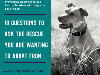 Questions To Ask The Rescue You Are Planning To Adopt From