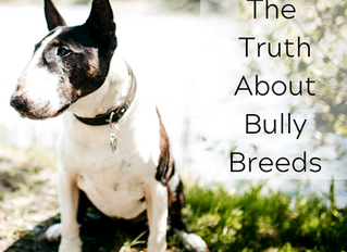 The Truth About Bully Breeds