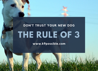 Don't Trust Your New Dog / The Rule Of 3