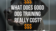 How Much Does Good Dog Training Really Cost?