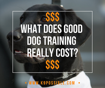 How Much Does Good Dog Training Really Cost? | Dog Training