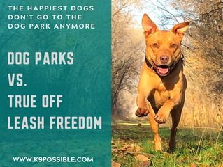 Why Off Leash Freedom Outside Of A Dog Park Or Fenced Area Is Crucial For Your Dog's Well Being