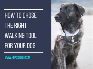 How To Chose The Right Walking Tool For Your Dog