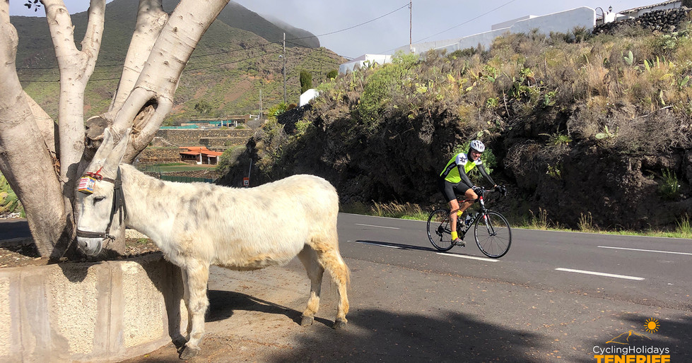 cyclingtourism tenerife.jpg