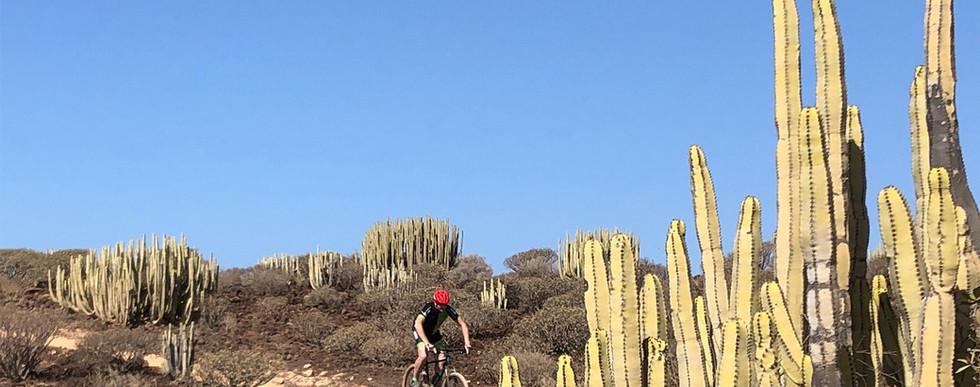tours mountain bike tenerife.jpg