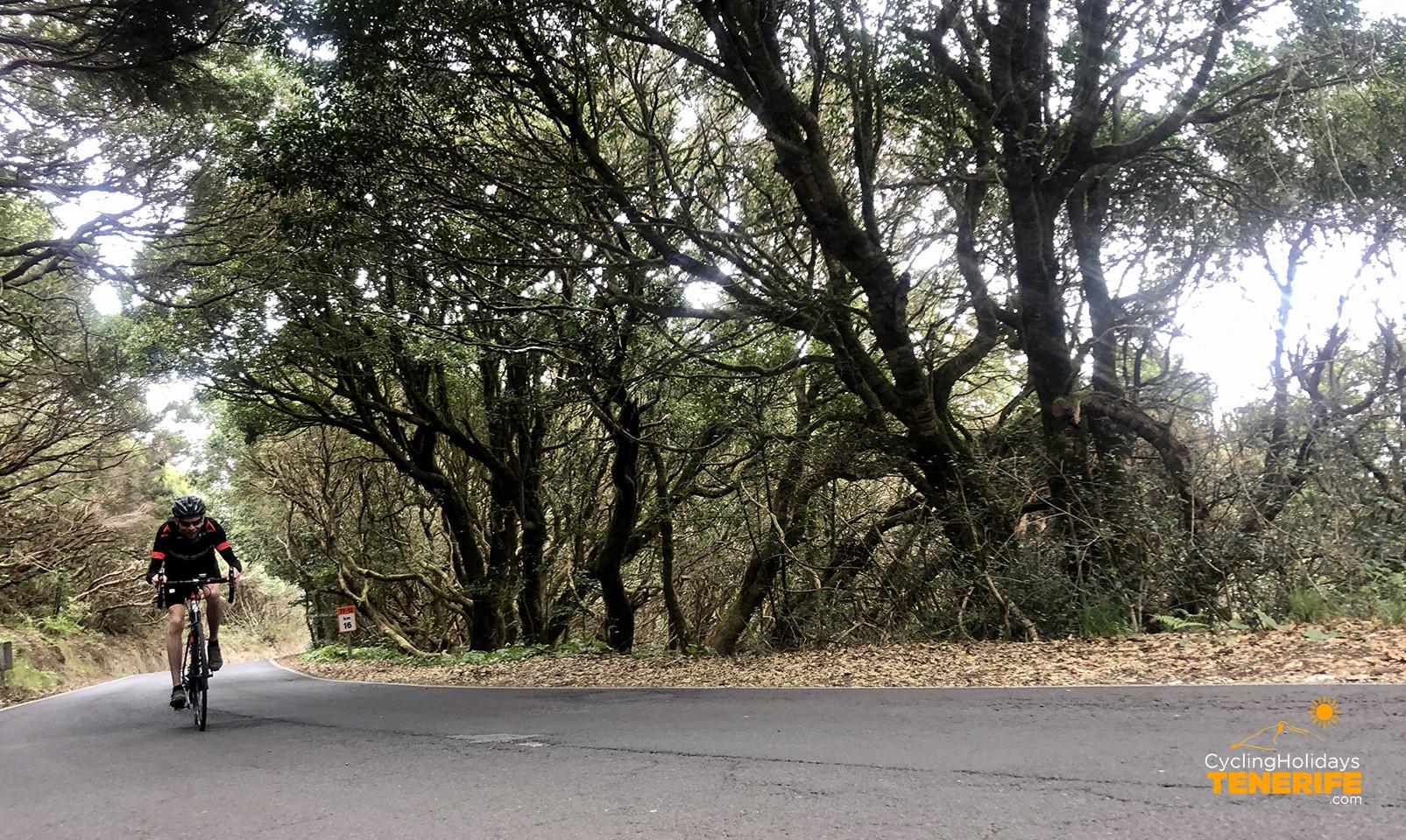laurisilva forest anaga tenerife.jpg