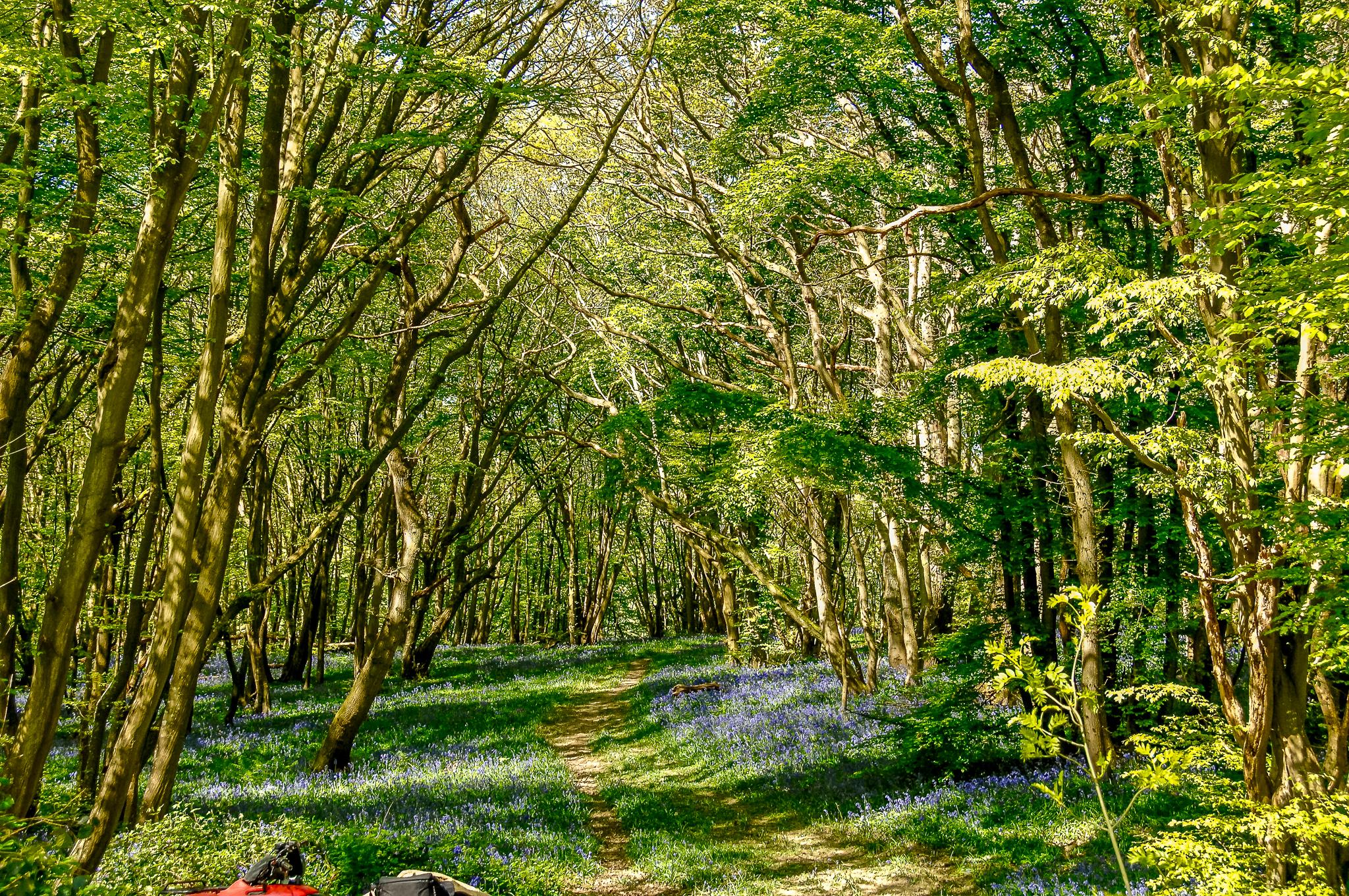 Woodland tracks