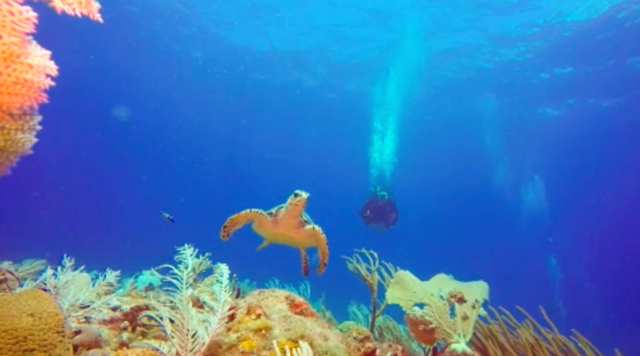 a scuba diver diving along with a sea turtle