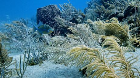 Coulées de lave incrustée de coraux