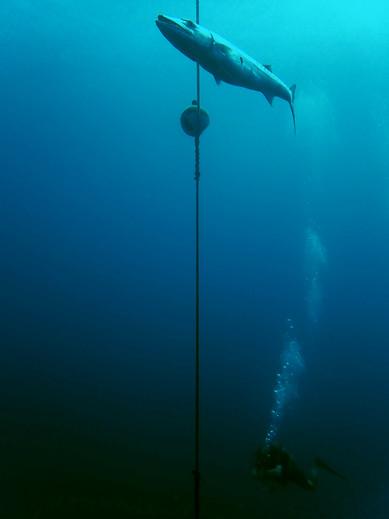 Rencontre sous-marines