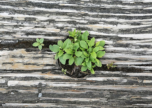 plant-413717_1920.jpg