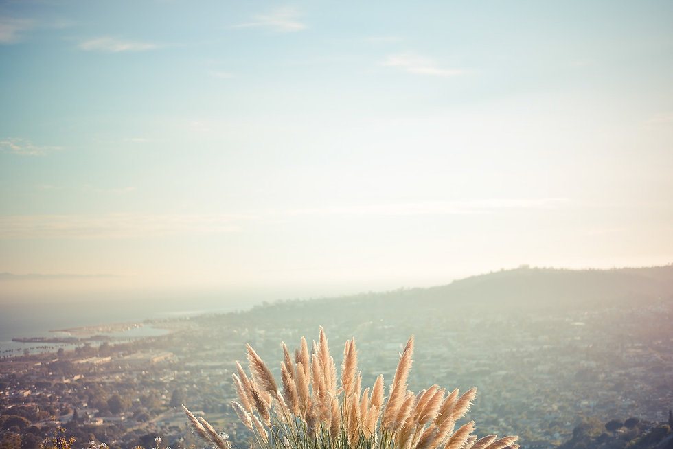 wheat-868976_1920.jpg