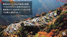 shimoguri_04[1].jpg
