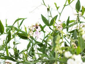 botanicalシリーズを撮っていて気づいたこと
