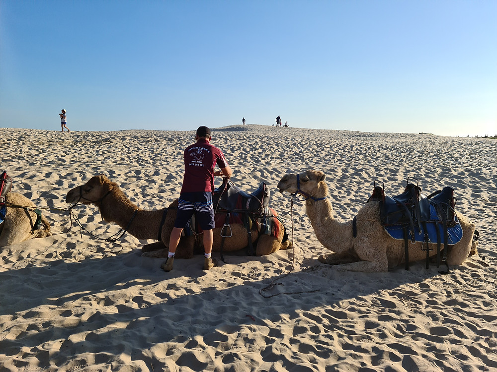 Likable Kids' Stuff | likable.com.au | Camel riding in Port Stephens | Family fun holiday activity