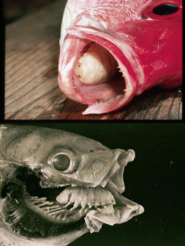 Parasite on fish