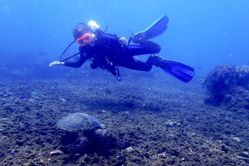 kids scuba diving turtles fun