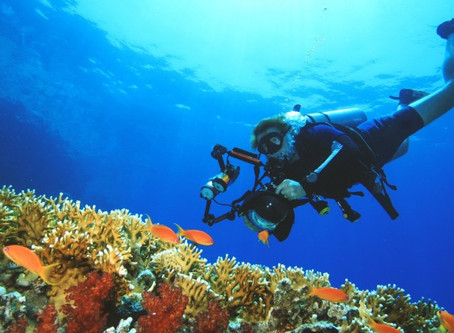 4 reasons to do the PADI Digital Underwater Photographer speciality course