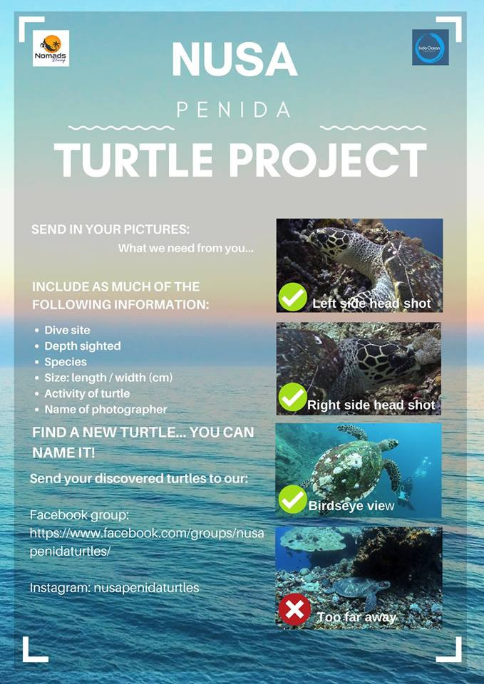 Nusa Penida Turtle Project