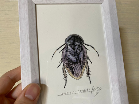 盛口満先生のルリゴキブリ画