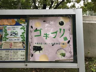 足立区生物園 2018年ゴキブリ展見学
