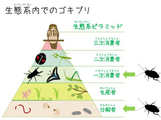ゴキブリの生態系内での位置