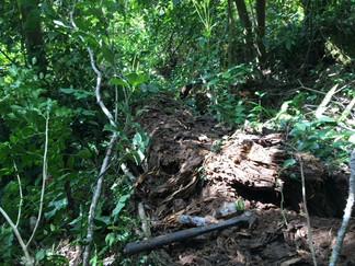 ホラアナゴキブリの採集:沖永良部島
