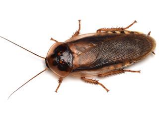 ゴキブリの飼育~脱走防止~