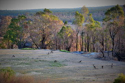 Roos Camp Logue Brook