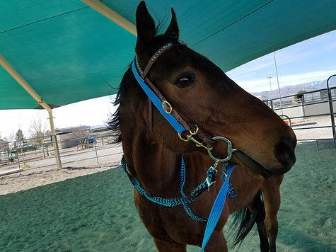 former racehorse adriatic moon in his new home