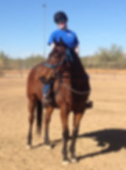 retired racehorse adriatic moon gets adopted