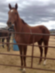 dancer's notes chestnut filly